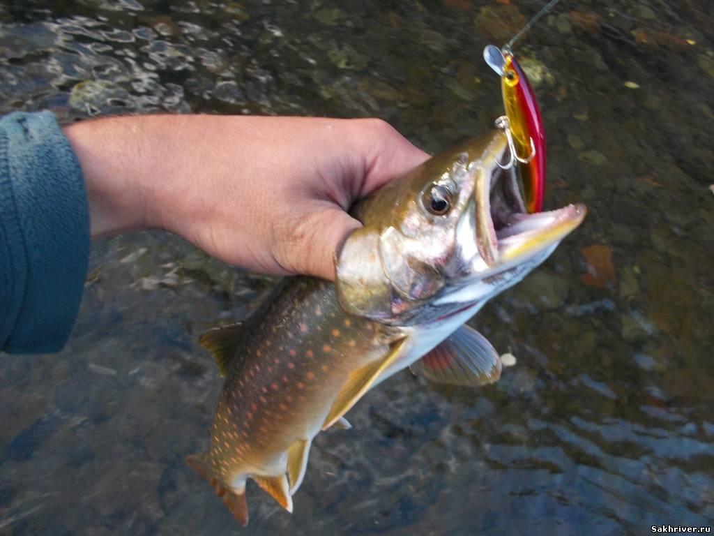 рыбалка ловя кунджи