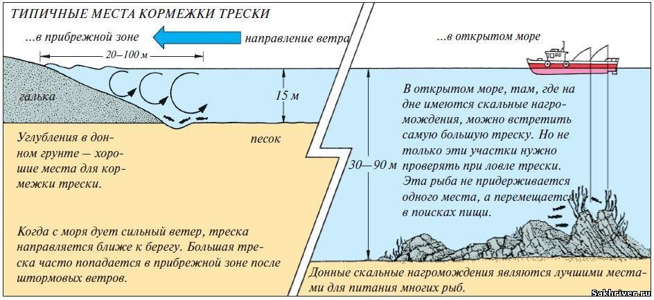 Как ловить треску с берега