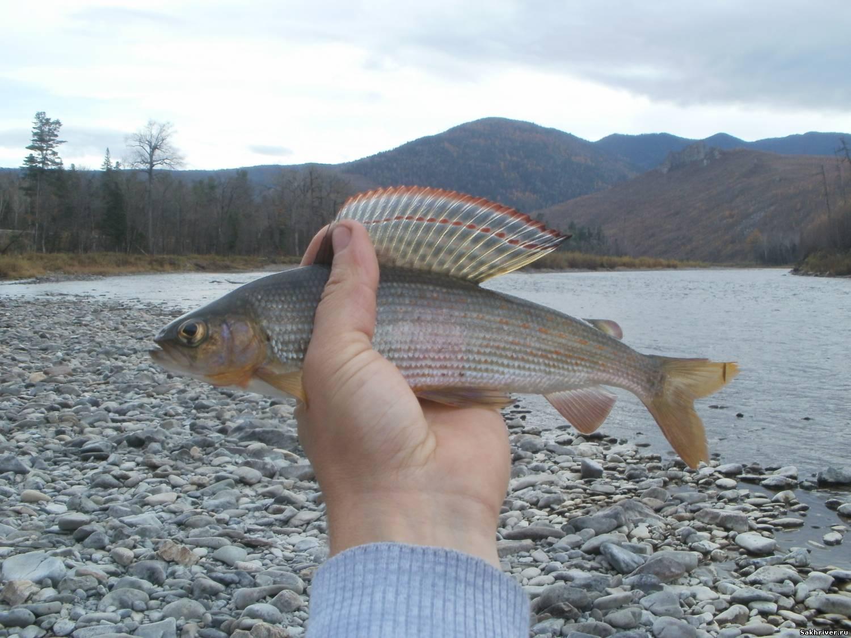 хорошево рыбалка донецк